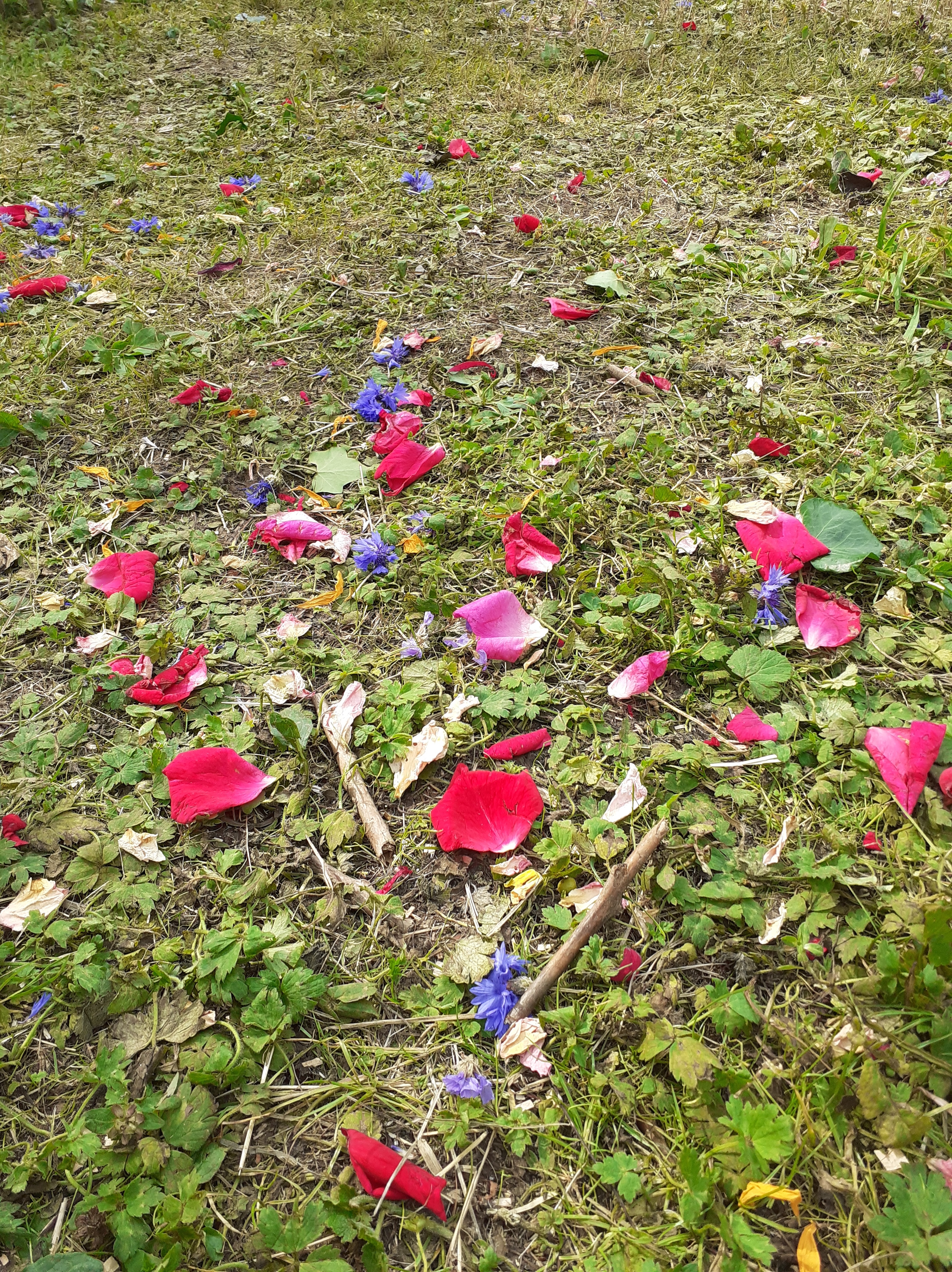colourful petals of red, pink and blue are scattered across a mossy, grassy ground