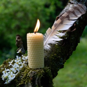 A list beeswax candle is standing on a tree branch, with a striped bird feather beind and a small bunch of white flowers aside it; a tree altar made by Keli Tomlin