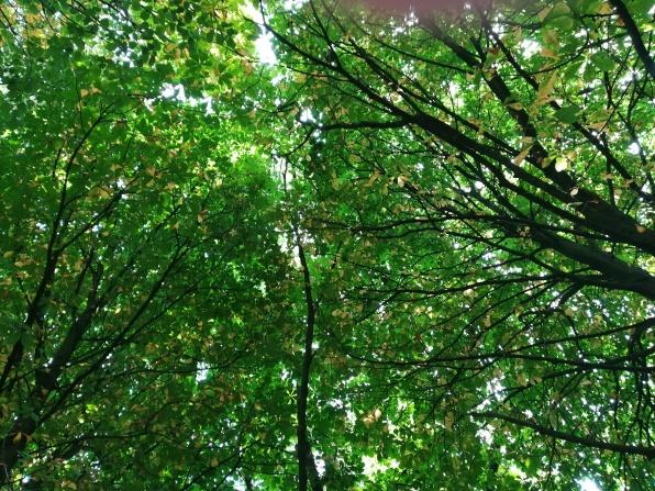 tree web